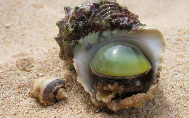 Більшість молюсків - морські тварини.