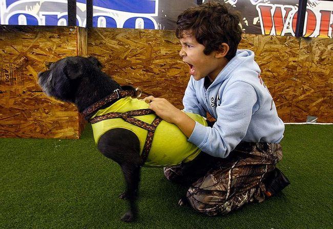 Блакитний дог на прізвисько Джордж - найбільша собака в світі