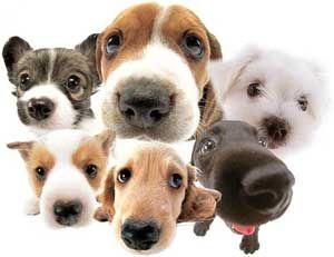 яку породу собак вибрати