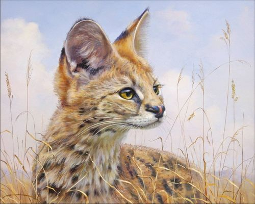 очеретяний кіт фото
