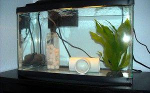 Карантин акваріумних риб