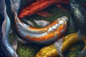 Карп кои: зміст в акваріумі