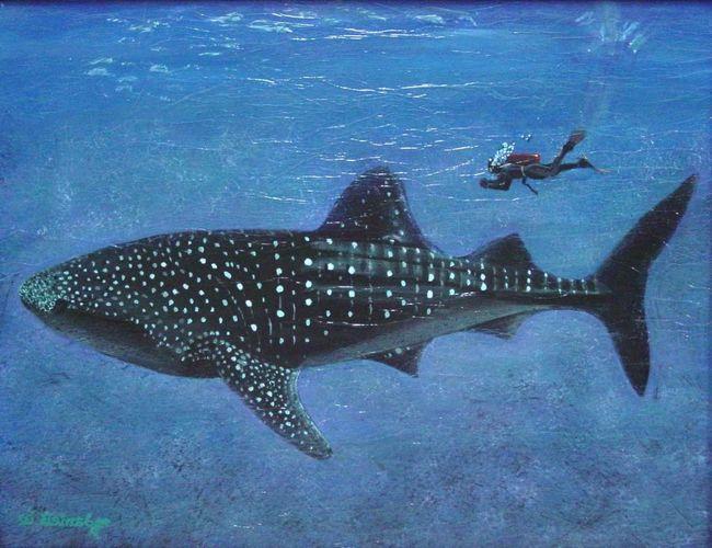 Китові акули не полюють на великих тварин.