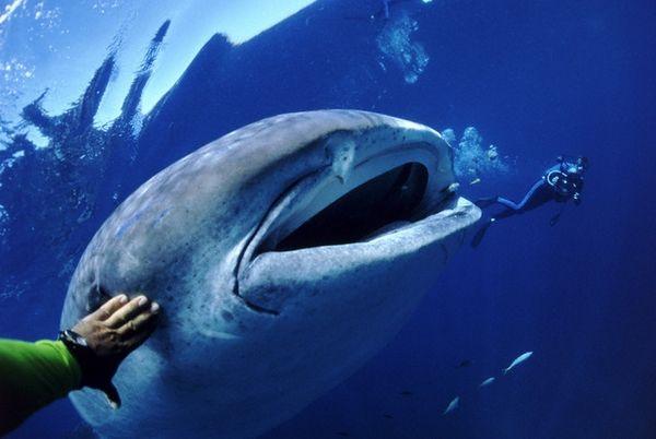 Риба-гігант в оточенні дослідників (Amos Nachoum / Corbis).