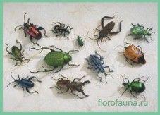 Класснасекомие / insecta