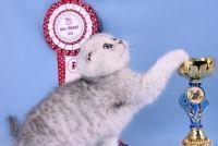 Клуб любителів кішок