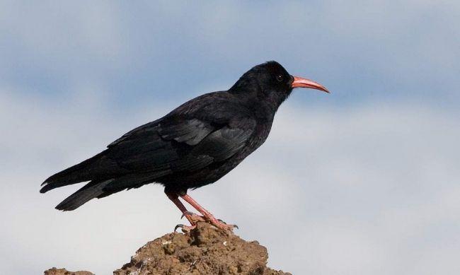 Птахи сидять в тінистих місцях, оглядаючи околиці.
