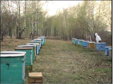 Коли виставляти бджіл із зимівника