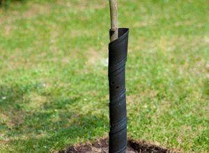 Також дерево потрібно захищати від шкідників