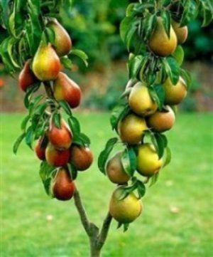 Щоб дерево добре росло і плодоносить, потрібно витратити чимало часу і сил