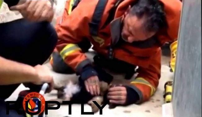 Порятунок собаки з бурхливого потоку в Колумбії.