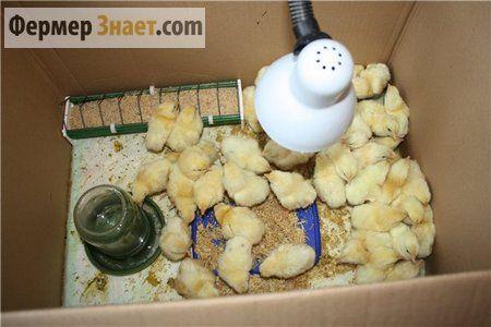 Годування новонароджених пташенят