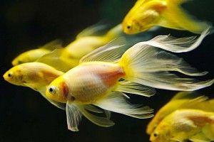 Корм для рибок своїми руками