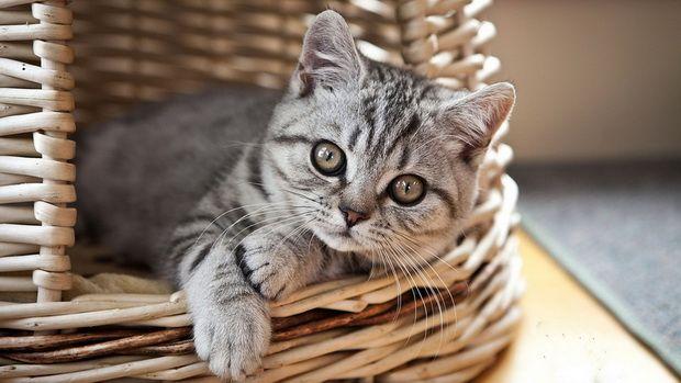 Годування кошенят натуральними продуктами