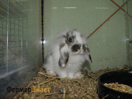 Білий кролик в клітці