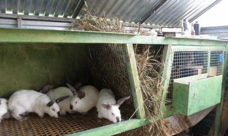 Годування кроликів в домашніх умовах