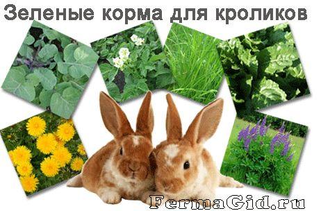 Годування кроликів: види кормів, норми харчування