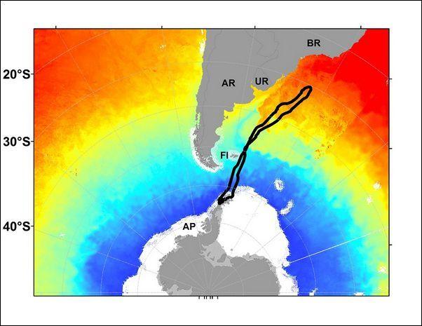 Схема міграції косаток під час линьки (малюнок авторів дослідження).