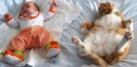 кішки і діти