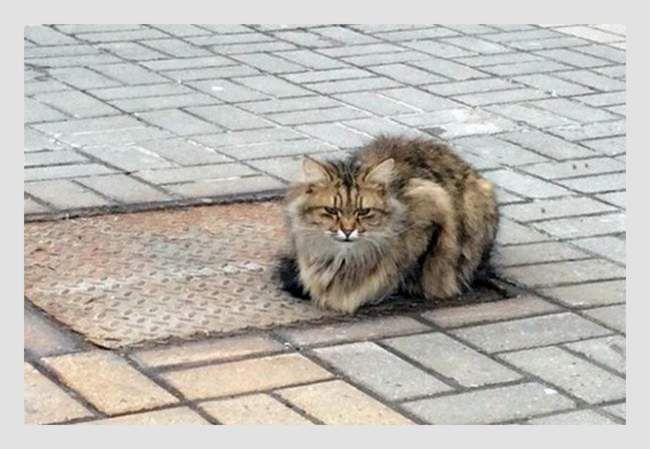 Тепер Хатіко називають не тільки відданих псів, а й котиків.