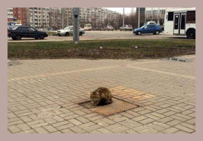 Господарі кинули кота Хатіко на вулиці.
