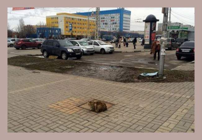 Незважаючи на зраду господарів, кіт так само чекає їх повернення.