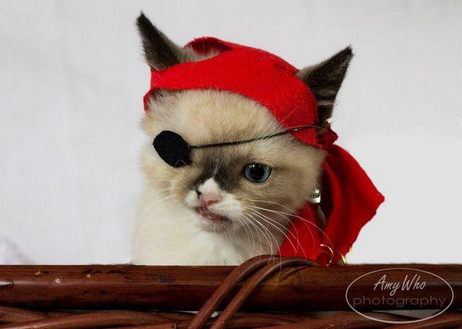 Кошеняті-пірату з притулку вирішили підшукати нових господарів
