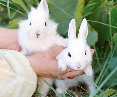 кролики, ніж годувати кроликів