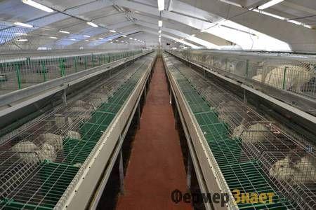 Механізована кролика-ферма