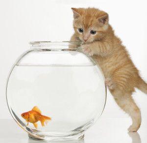 Круглий акваріум