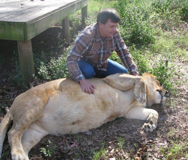 Лев Лео, бенгальський тигр Шер-Хан і ведмідь Балу - нерозлучні друзі