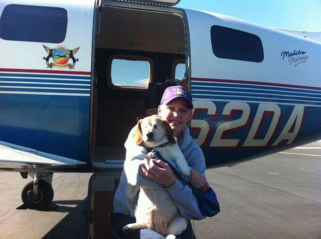 Льотчики-волонтери рятують безпритульних собак від усипляння, доставляючи їх новим господарям за тисячі кілометрів