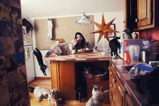 Люди, які обожнюють кішок