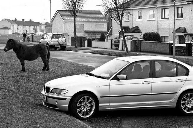 Коні на вулицях Дубліна