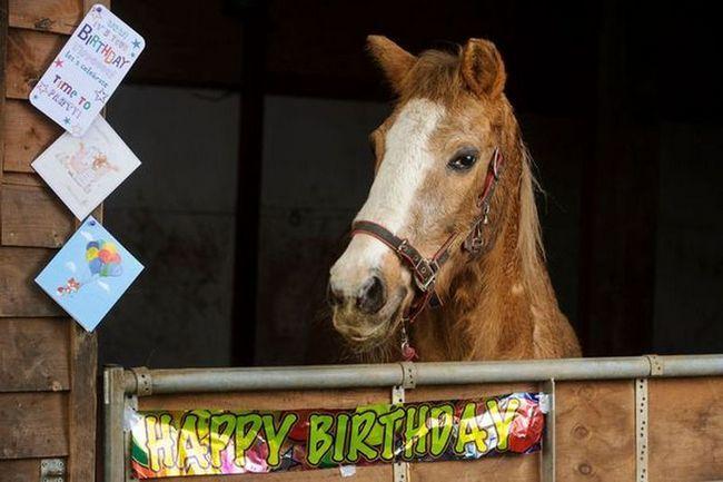 Померла найстаріша в світі кінь