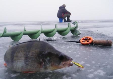 Ловля судака взимку 2016