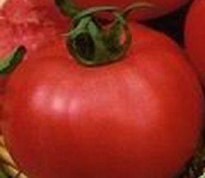 «Цунамі» плодоносить рано і дає хороші врожаї