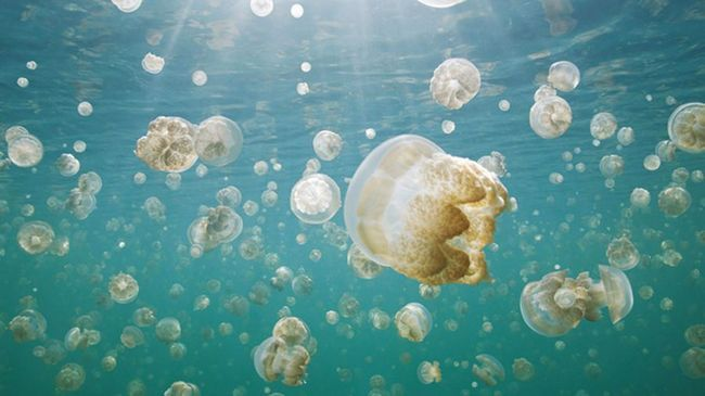 Кращі фотографії, які претендують на перемогу у фотоконкурсі National Geographic Traveler 2015