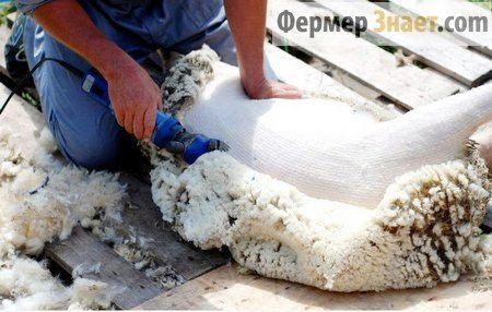 Кращі машинки для стрижки овець
