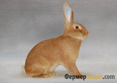 Бургундський кролик