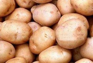 Садити картоплю краще починати в травні