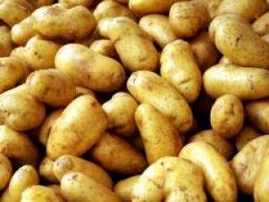 Картопля сорту «Лідер» не боїться фітофторозу