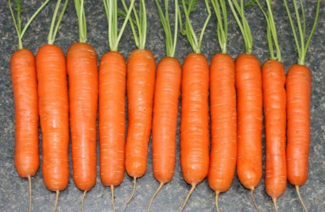 luchshie-sorta-morkovi