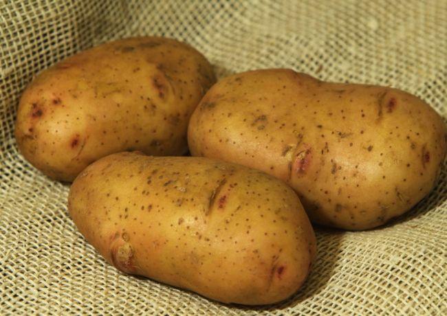 Сорт картоплі «Жуковський ранній»