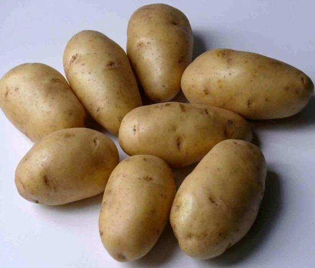 Сорт картоплі «Імпала»