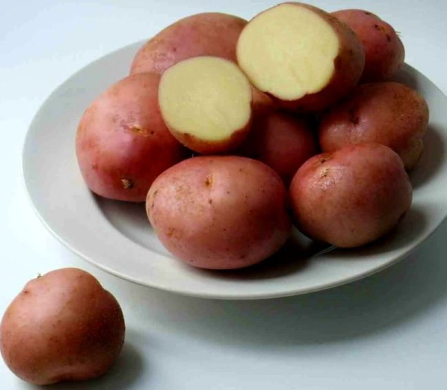 Сорт картоплі «Романо»