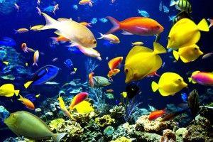 Маленькі акваріуми для рибок