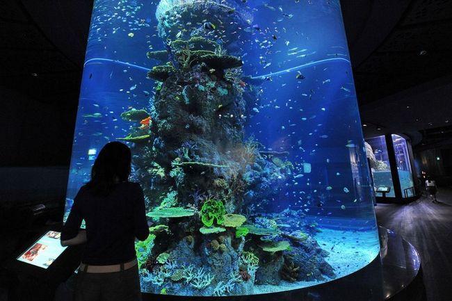 Marine Life Park - найбільший в світі океанаріум