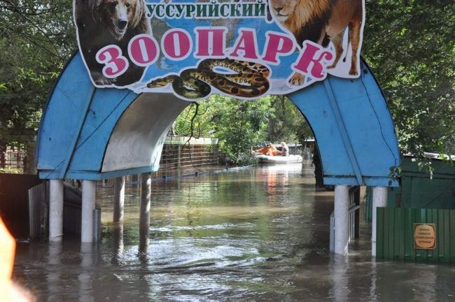 Евакуація ведмедів із зоопарку Уссурійська.