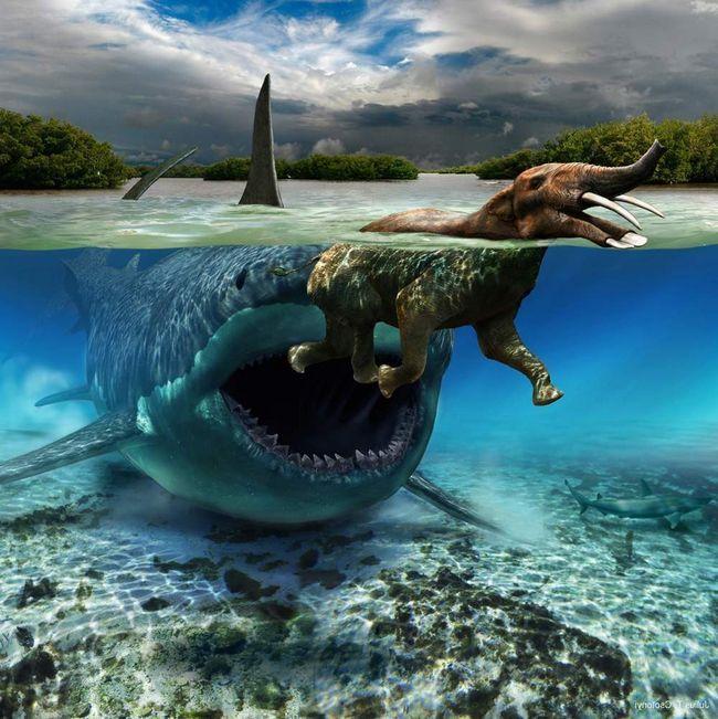 Мегалодон полював на морських тварин.